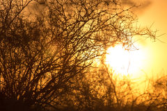 Δέντρο σε ένα υπόβαθρο της όμορφης ανατολής Στοκ εικόνα με δικαίωμα ελεύθερης χρήσης