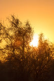 Δέντρο σε ένα υπόβαθρο της όμορφης ανατολής Στοκ φωτογραφία με δικαίωμα ελεύθερης χρήσης