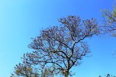 Δέντρο σε ισχύ κάποια Στοκ Εικόνα