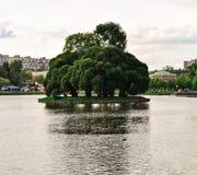 Δέντρο σε μια δεξαμενή Στοκ εικόνες με δικαίωμα ελεύθερης χρήσης