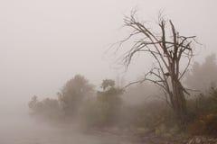Δέντρο σε μια ομιχλώδη τράπεζα στοκ φωτογραφία