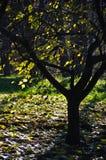 Δέντρο σε μια σκιά μια ηλιόλουστη ημέρα Στοκ Εικόνες