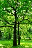 Δέντρο σε πράσινο Στοκ Εικόνες