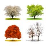 Δέντρο σε τεσσάρων εποχών Στοκ φωτογραφίες με δικαίωμα ελεύθερης χρήσης