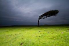 Δέντρο σε Crowlink στοκ φωτογραφία με δικαίωμα ελεύθερης χρήσης