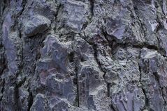 Δέντρο σε Dendropark, επαρχία της Lori, Αρμενία στοκ φωτογραφίες