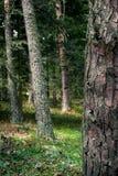 Δέντρο σε Dendropark, επαρχία της Lori, Αρμενία στοκ εικόνες