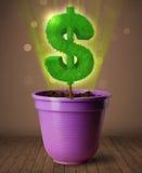 Δέντρο σημαδιών δολαρίων που βγαίνει από flowerpot Στοκ εικόνα με δικαίωμα ελεύθερης χρήσης