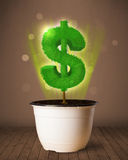 Δέντρο σημαδιών δολαρίων που βγαίνει από flowerpot Στοκ Εικόνα