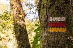 Δέντρο σημαδιών πεζοπορίας που χαρακτηρίζει τη σωστή κατεύθυνση Στοκ φωτογραφία με δικαίωμα ελεύθερης χρήσης