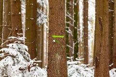 Δέντρο σημαδιών Στοκ εικόνα με δικαίωμα ελεύθερης χρήσης