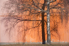 Δέντρο σημύδων φθινοπώρου με τη σκιά Στοκ φωτογραφίες με δικαίωμα ελεύθερης χρήσης