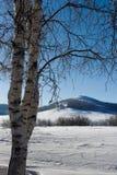 δέντρο σημύδων Στοκ εικόνες με δικαίωμα ελεύθερης χρήσης