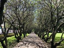Δέντρο σηράγγων στοκ φωτογραφία με δικαίωμα ελεύθερης χρήσης