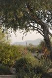 δέντρο σκηνής Στοκ εικόνες με δικαίωμα ελεύθερης χρήσης