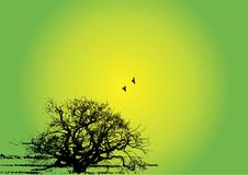δέντρο σκιαγραφιών ανασκό&p Στοκ φωτογραφίες με δικαίωμα ελεύθερης χρήσης