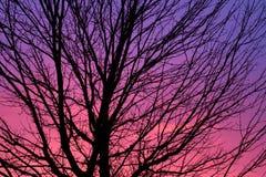 δέντρο σκιαγραφιών αυγής Στοκ Φωτογραφία