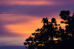 Δέντρο σκιαγραφιών ηλιοβασιλέματος Στοκ φωτογραφία με δικαίωμα ελεύθερης χρήσης