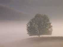 δέντρο σκιαγραφιών λόφων Στοκ Φωτογραφίες