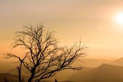 Δέντρο σκιαγραφιών με το υπόβαθρο ανατολής Στοκ Εικόνα