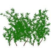 δέντρο σκιαγραφιών περιγραμμάτων κισσών Διανυσματική απεικόνιση