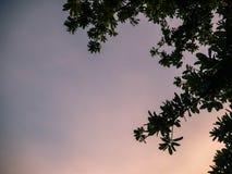 Δέντρο σκιαγραφιών στον ουρανό ηλιοβασιλέματος στοκ φωτογραφίες με δικαίωμα ελεύθερης χρήσης