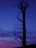 Δέντρο σκιαγραφιών στο ηλιοβασίλεμα Στοκ Εικόνες