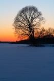 δέντρο σκιαγραφιών του s Στοκ εικόνες με δικαίωμα ελεύθερης χρήσης