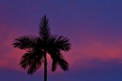 δέντρο σκιαγραφιών φοινι&kapp Στοκ Φωτογραφία