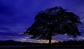 δέντρο σκιαγραφιών διανυσματική απεικόνιση