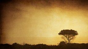 δέντρο σκιαγραφιών Στοκ Εικόνες