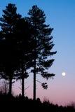 δέντρο σκιαγραφιών Στοκ Φωτογραφία