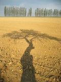 δέντρο σκιών πεδίων συγκο Στοκ Φωτογραφία