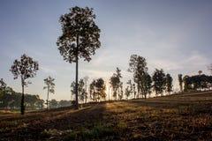 Δέντρο σκιών στο καθορισμένο υπόβαθρο ήλιων Στοκ Φωτογραφίες
