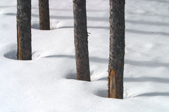 δέντρο σκιών στοκ φωτογραφία με δικαίωμα ελεύθερης χρήσης