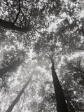 Δέντρο σκιών στοκ φωτογραφίες με δικαίωμα ελεύθερης χρήσης