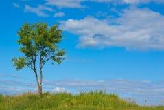 δέντρο σορβιών Στοκ Εικόνα