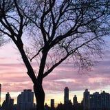 Δέντρο σούρουπου Στοκ Εικόνες