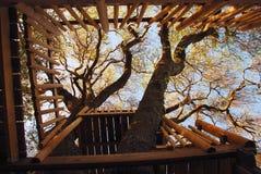 δέντρο σπιτιών Στοκ φωτογραφία με δικαίωμα ελεύθερης χρήσης