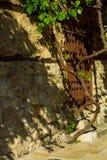 Δέντρο σταφυλιών κοντά στον τοίχο πετρών Στοκ φωτογραφία με δικαίωμα ελεύθερης χρήσης