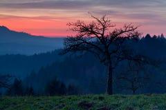 Δέντρο στα βουνά στο δραματικό ηλιοβασίλεμα Στοκ Εικόνα
