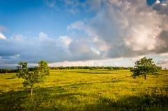 Δέντρο στα μεγάλα λιβάδια, στο εθνικό πάρκο Shenandoah, Βιρτζίνια στοκ φωτογραφία με δικαίωμα ελεύθερης χρήσης