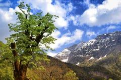 Δέντρο στα σλοβένικα όρη Στοκ Φωτογραφία