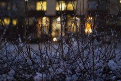 Δέντρο στα φω'τα νύχτας, έντονο φως στο υπόβαθρο Στοκ Εικόνα