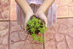 Δέντρο στα χέρια το κορίτσι στοκ εικόνα με δικαίωμα ελεύθερης χρήσης