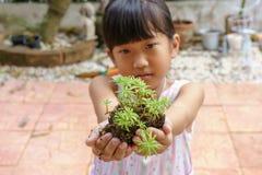 Δέντρο στα χέρια το κορίτσι στοκ φωτογραφία με δικαίωμα ελεύθερης χρήσης