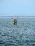 Δέντρο στενό στον επάνω λιμνών Στοκ Εικόνες