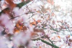 Δέντρο στην άνθιση Στοκ Φωτογραφία