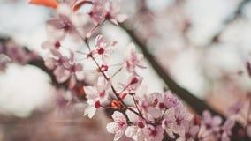 Δέντρο στην άνθιση Στοκ Εικόνες