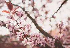Δέντρο στην άνθιση Στοκ φωτογραφία με δικαίωμα ελεύθερης χρήσης